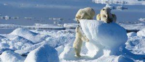 550x235-Spitsbergen-550-Polar-Bear-pubs