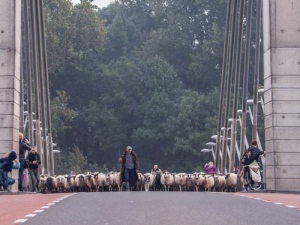 image-4548493 schapen
